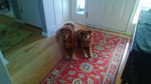 My Faithful companions Lucky and Ella