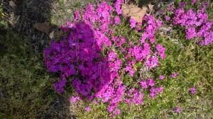 Weeds detract