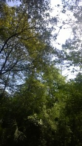 Palmetto Island County Park